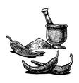 pepper shaker vector image vector image