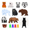 bear wild animal wild angry brown grizzly vector image