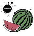 berry juicy watermelon vector image vector image