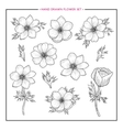Flower set hand drawn anemone vector image vector image