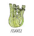 green fennel balb vegetable collection eps10 vector image