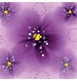 Pansy flowers on the greeting card vector image vector image