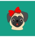 Pug with bow vector image
