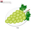 Ripe Grape A Popular Fruit in Iraq vector image vector image