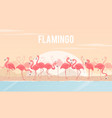 set of flamingos on background vector image