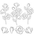 with flowering magnolia branches vector image vector image