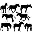 Zebra donkeys vector image vector image