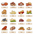 cartoon color nut and seed grains vector image