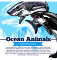 killer whale or orca and shark fish poster vector image