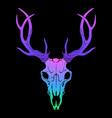 rainbow bright deer skull on black background vector image