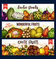 fruits from exotic countries sketch vector image vector image