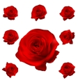 Red roses set isolated on white EPS 10 vector image vector image