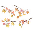set of maple autumn leaves vector image vector image