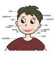 boyhead vector image vector image