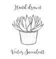 cute hand drawn succulent astroloba tenax in a vector image