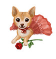 cute little puppy in pink skirt lies with red vector image