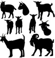 Goats silhouette vector image vector image