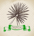 Hand drawn sketch tropical plants vintage vector image vector image