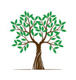 color shape of tree with green leaf vector image vector image
