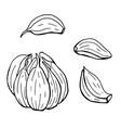 linear set garlic line art vector image vector image