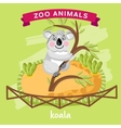Zoo Animal Koala vector image vector image