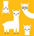 alpaca llama animal set face in rainbow glassess vector image vector image