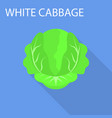 white cabbage icon flat style vector image