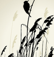 A bird sitting on the cane during the summer day vector image vector image
