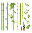 bamboo stems and leaves