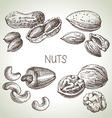 Hand drawn sketch nuts set of eco food vector image vector image
