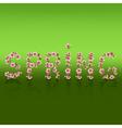 Spring word sakura blossom Japanese cherry tree