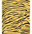 tiger skin texture safari style vector image