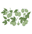 collection of elegant botanical drawings of hop vector image vector image