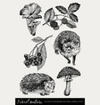 collection of highly detailed hand drawn mushrooms vector image vector image