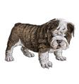 Puppy bulldogs 05 vector image vector image