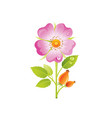 wild rose flower floral icon realistic rosa with vector image vector image