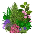 colorful of flowerbad vector image vector image