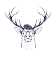 Deer head in glasses vector image vector image