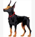 doberman guard dog vector image
