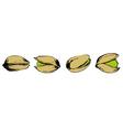set of pistachio vector image