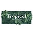 tropical monstera green leaf banner vector image