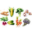 vegetables watercolor set collection vector image vector image
