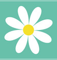 white daisy chamomile cute flower plant vector image vector image