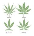 4 grades cannabis leaf set vector image vector image