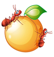 A fruit with two ants vector image vector image