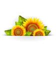 Flower of sunflower vector image vector image