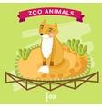 Zoo Animal Fox vector image vector image