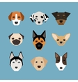 Dogs in flat style vector image