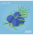 juniper flat design icon vector image vector image