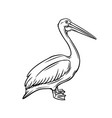 pelican outline icon vector image vector image